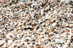 Overzeese Shells op zand Stock Afbeelding