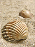Overzeese shells op zand Stock Fotografie
