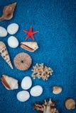 Overzeese Shells op zand Royalty-vrije Stock Foto