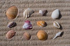 Overzeese Shells op zand Stock Foto