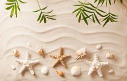 Overzeese Shells op zand Het strandachtergrond van de zomer stock afbeeldingen
