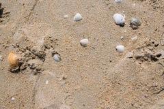 Overzeese Shells op zand Het strandachtergrond van de zomer royalty-vrije stock foto
