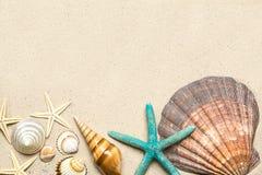 Overzeese Shells op zand Het strandachtergrond van de zomer Hoogste mening Royalty-vrije Stock Fotografie