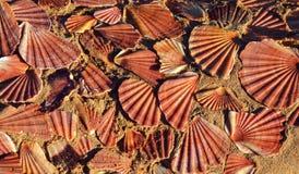 Overzeese shells op zandachtergrond Stock Afbeeldingen