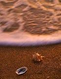 Overzeese shells op zandig strand 1 Stock Afbeeldingen