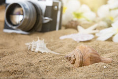 Overzeese shells op zandig strand De zomer stock afbeelding
