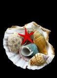 Overzeese shells op zwarte stock foto's