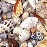 Overzeese shells in regeling royalty-vrije stock foto