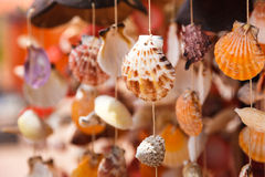 Overzeese shells sluiten omhoog stock foto