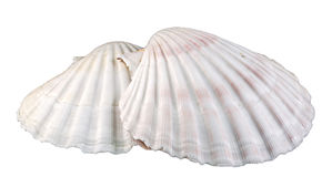 Overzeese shells sluiten omhoog, geïsoleerd, knipsel Royalty-vrije Stock Foto's