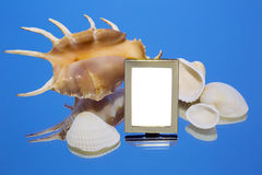 Overzeese shells, spiegel, fotokader Royalty-vrije Stock Foto's
