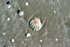 Overzeese shells, zandig strand Royalty-vrije Stock Fotografie