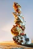 Overzeese Shells Zeeschelpen, overzeese shells van panoramisch strand - - met l stock afbeelding