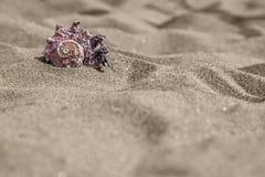 Overzeese slakshell in zand Stock Foto's