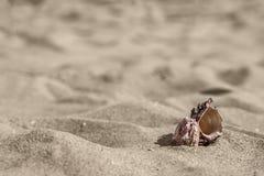 Overzeese slakshell in zand Royalty-vrije Stock Afbeeldingen