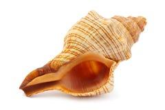 Overzeese spiraalvormige shell Stock Foto's