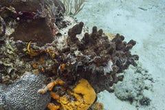 Overzeese spons en kleine vissen Royalty-vrije Stock Afbeeldingen