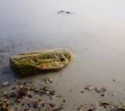 Overzeese steen Stock Foto's