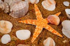 Overzeese ster en zeeschelpen van verschillende kleur en grootte geschoten close-up royalty-vrije stock foto's