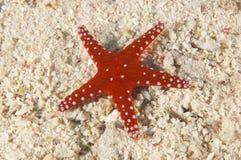 Overzeese ster op een zandige zeebedding stock fotografie
