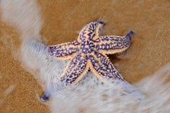 Overzeese ster op strand Stock Fotografie