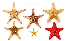 Overzeese sterren. Royalty-vrije Stock Foto's