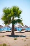 Overzeese toevlucht, toneel zandig strand met palmen Stock Foto's