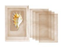 Overzeese van de kroonslak shell op oud document Royalty-vrije Stock Foto