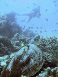 Overzeese van Hawksbill schildpad en duiker royalty-vrije stock fotografie