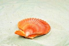 Overzeese van het strand shells Stock Foto