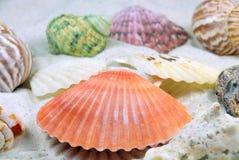 Overzeese van het strand shells Stock Afbeelding
