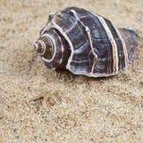 Overzeese van Nice shells op het zandige strand stock afbeelding