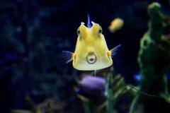 Overzeese Vissen 2 Stock Fotografie