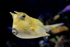 Overzeese Vissen 2 Royalty-vrije Stock Afbeelding