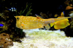 Overzeese Vissen 3 Stock Foto's