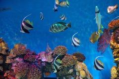Overzeese vissen Royalty-vrije Stock Afbeelding