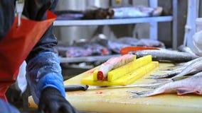 Overzeese vissenfabriek stock video