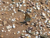 Overzeese vlinder Stock Afbeeldingen