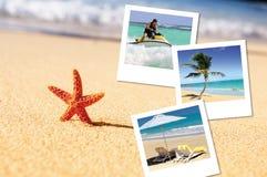 Overzeese zeester en pics Stock Foto
