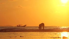 Overzeese zonsondergang met hond en boot stock footage