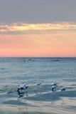 Overzeese zonsondergang met oranje wolkenhemel Vogels op de golven Royalty-vrije Stock Afbeeldingen