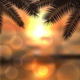 Overzeese zonsondergang met palmtreebladeren en licht op lens Royalty-vrije Stock Fotografie