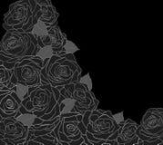 Overzicht van rozen op een zwarte Stock Foto