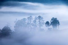 Overzichten van bomen in mist het kruipen royalty-vrije stock foto