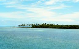 Overziend de baai, met palmen in Florida Royalty-vrije Stock Fotografie