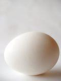 Ovo branco Imagens de Stock