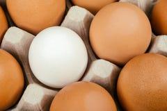 Ovo branco cercado por ovos marrons Individualidade e diferença fotografia de stock royalty free