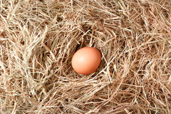 Ovo da galinha Fotografia de Stock