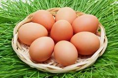 Ovo da galinha de Brown em uma cesta de vime Foto de Stock