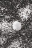 Ovo da galinha na terra Fotos de Stock Royalty Free